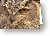Owl Prints Greeting Cards - European Eagle Owl Greeting Card by Peter Chapman