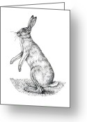 Hare Greeting Cards - European Hare, Artwork Greeting Card by Lizzie Harper