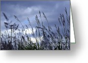Gray Greeting Cards - Evening grass Greeting Card by Elena Elisseeva