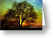 Tree Limbs Greeting Cards - Evening Palette Greeting Card by Benanne Stiens