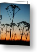 Golden Framed Prints Greeting Cards - Evening plant silhouette Greeting Card by Roy Chen-Campbell