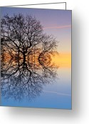 Reflected Tree Greeting Cards - Evening sky trails Greeting Card by Sharon Lisa Clarke