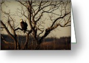National Bird Greeting Cards - Evening Watch Greeting Card by Lana Trussell