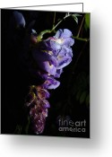 Midori Greeting Cards - Evening Wisteria after the Rain Greeting Card by Elizabeth Douglass