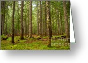 Forested Greeting Cards - Ever Green Greeting Card by Idaho Scenic Images Linda Lantzy