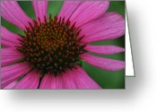 Flower Still Life Prints Greeting Cards - Ever Popular Greeting Card by Barbara S Nickerson
