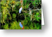 Everglades Greeting Cards - Everglades Egret Greeting Card by David Lee Thompson