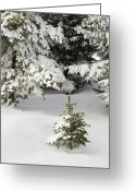 Tom Biegalski Greeting Cards - Evergreen Snow Scene Greeting Card by Tom Biegalski