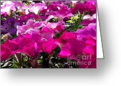 Vinca Flowers Greeting Cards - Everythings coming up Petunias Greeting Card by Elizabeth Coats