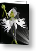 Egret Digital Art Greeting Cards - Evy Greeting Card by Torie Tiffany