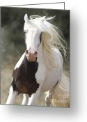 Gallop Greeting Cards - Excitement Greeting Card by Kate Black