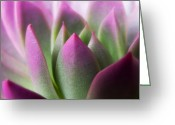 Photographs Digital Art Greeting Cards - Exotic - Pink Purple Green Flower Landscape Photograph Greeting Card by Artecco Fine Art Photography - Photograph by Nadja Drieling
