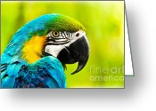 Ara Ararauna Greeting Cards - Exotic colorful African macaw parrot Greeting Card by Anna Omelchenko