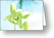 Dendrobium Greeting Cards - Exotic Orchid Beauty Greeting Card by Georgia Fowler