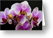 Exotic Orchid Greeting Cards - Exotic Orchids Greeting Card by Angelina Vick