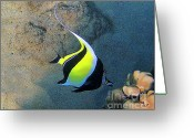 Reef Fish Greeting Cards - Exotic Reef Fish  Greeting Card by Bette Phelan