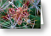 Plants Greeting Cards - Exotic Spikes Greeting Card by Kimberly Gonzales