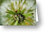 Feathery Greeting Cards - Expired Greeting Card by Robert Harmon