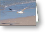 Tern Greeting Cards - Exploring the Shiny  Crystal  Waters  Greeting Card by E Luiza Picciano