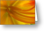 Lily Greeting Cards - Explosion Greeting Card by Juergen Roth