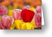 Licht Greeting Cards - Explosion of colors Greeting Card by Angela Doelling AD DESIGN Photo and PhotoArt