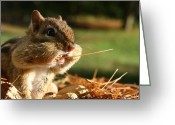 Chipmunk Greeting Cards - Extra Fiber Greeting Card by Lori Deiter
