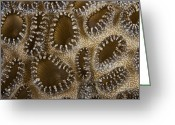 Poisonous Greeting Cards - Extreme Close-up Of A Crust Anemone Greeting Card by Terry Moore