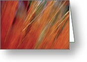 Large Group Greeting Cards - Extreme Close-up Of Wheat Growing In Field Greeting Card by Medioimages/Photodisc