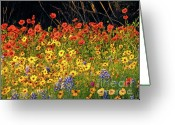 Texas Wildflowers Greeting Cards - Exuberant Spring Greeting Card by Joe JAKE Pratt
