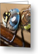 Colours Greeting Cards - Eye of a Dragonfly  Greeting Card by Gert Lavsen