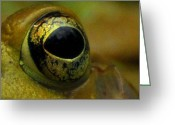 Witches Greeting Cards - Eye of Frog Greeting Card by Paul Ward
