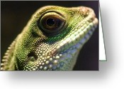 Lizard Greeting Cards - Eye of Lizard Greeting Card by Charles Dobbs