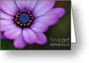 Stamen Greeting Cards - Eye of the Daisy Greeting Card by Kaye Menner