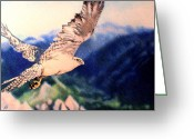 Falcon Drawings Greeting Cards - Eye of the Gyr Greeting Card by Nils Beasley