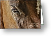 Quarter Horse Photo Greeting Cards - Eye Of The Horse Greeting Card by Susan Candelario