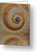 Twirl Greeting Cards - Eye of the Snail Greeting Card by Susan Candelario