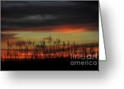 Sea Oats Greeting Cards - Eye over sea oats Greeting Card by David Lee Thompson