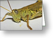 Green Grass Hopper Greeting Cards - Eye See You Greeting Card by Brenda Conrad