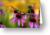 Echinacea Greeting Cards - Eye To Eye Greeting Card by Lois Bryan