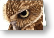 Burrowing Owl Greeting Cards - Eyeful Greeting Card by Pat Erickson