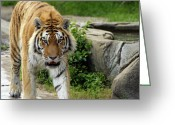 Paws Digital Art Greeting Cards - Eyeing me up Greeting Card by Gordon Dean II