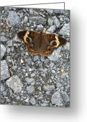 Tamara Stoneburner Greeting Cards - Eyes of a Moth Greeting Card by Tamara Stoneburner