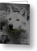 Playful Wolves Greeting Cards - Eyes Of The Wolf Greeting Card by Debra     Vatalaro