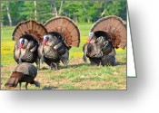 Eastern Turkey Greeting Cards - Eyes On The Prize Greeting Card by Todd Hostetter