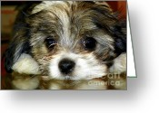 Paws Greeting Cards - Eyes on You Greeting Card by Karen Wiles
