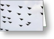 Large Group Greeting Cards - F-14d Tomcats Conduct A Flyover Greeting Card by Stocktrek Images