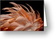 Feathery Greeting Cards - Fabulous Flamingo Feathers Greeting Card by Sabrina L Ryan