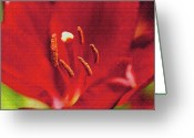 Designers Choice Photo Greeting Cards - Fabulous Red Greeting Card by Don Wright
