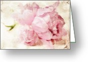 Pink Peonies Greeting Cards - Faded Greeting Card by Cathie Tyler
