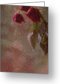 Roses Petals Greeting Cards - Faded Glory Greeting Card by Marion Cullen